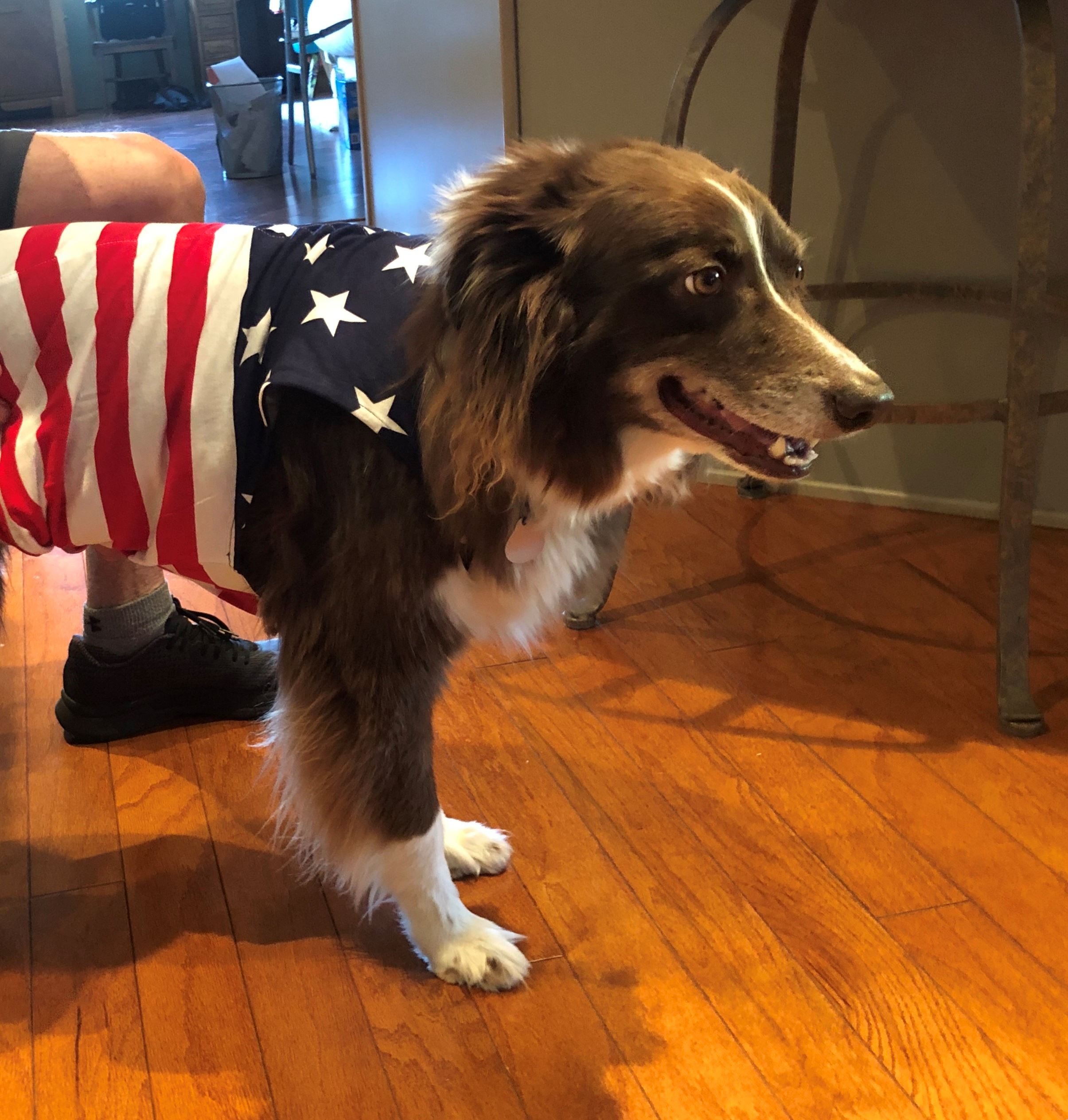 Commissioner Van Ackeren's dog Mika dressed up for the Fourth of July